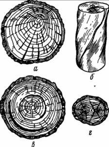 Пороки вызываемые неправильностью роста древесины
