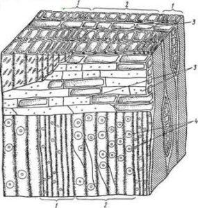 Микроструктура древесины хвойных пород