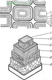 Строение стенки клетки древесины