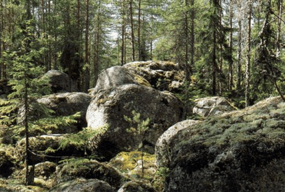 Ледниковые валуны в лесу