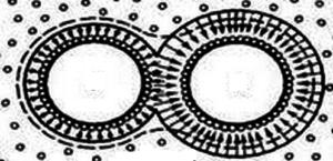 Схема передвижения пленочной воды ( по А.Ф. Лебедеву)