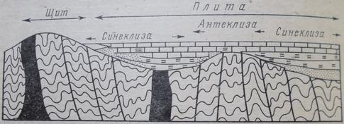 Схематичный типичный разрез через щиты, синеклизы и антеклизы на платформе с докембрийским складчатым основанием
